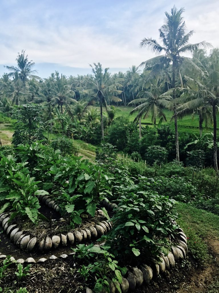 clean island: bali, part 1 (ubud) - Prompted by a close friend to…